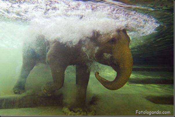 Fotos de animais no zoo capturadas no momento certo (2)