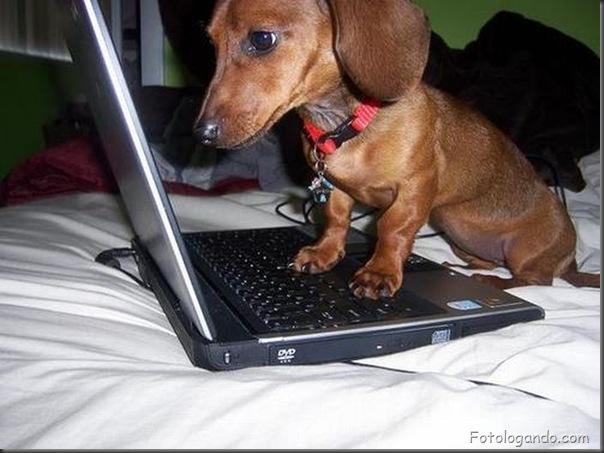 Animais no computador (11)