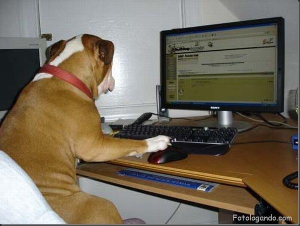 Animais no computador (1)