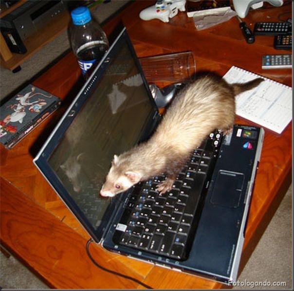 Animais no computador (6)