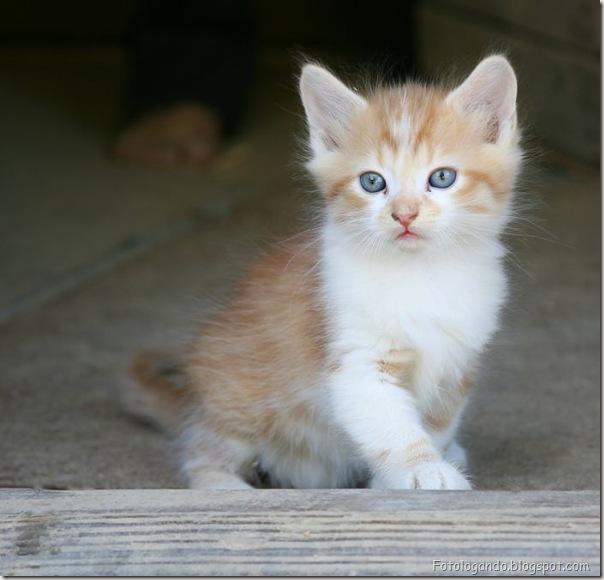 momento oinn especial gatos (28)