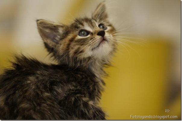 momento oinn especial gatos (2)