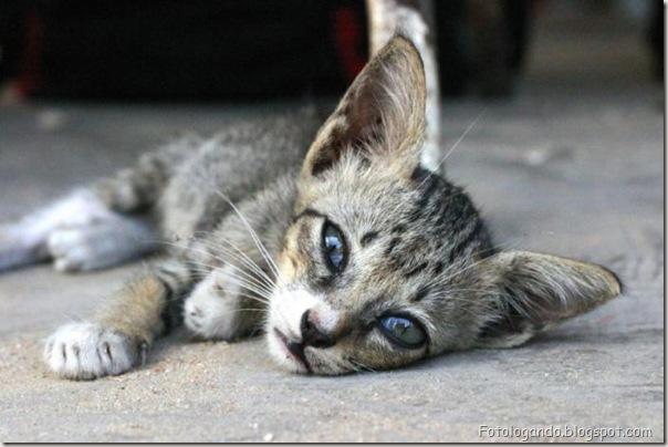 momento oinn especial gatos (61)