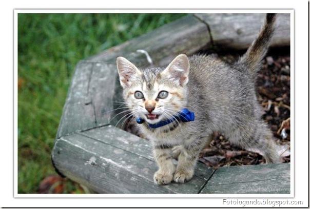 momento oinn especial gatos (56)