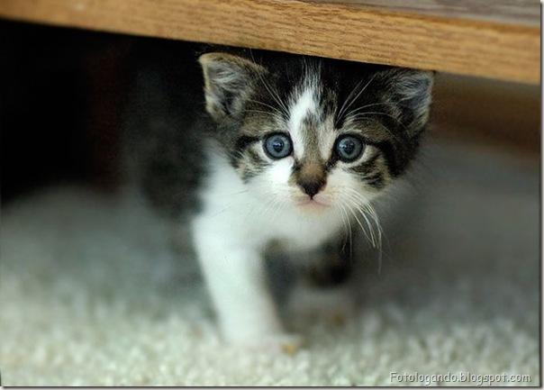 momento oinn especial gatos (63)