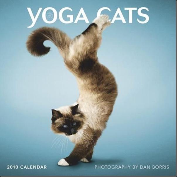 A yoga dos gatos