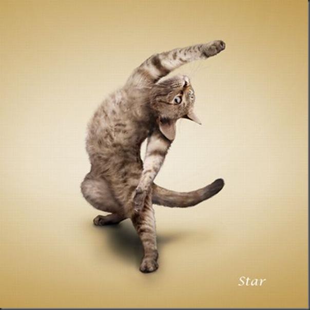 A yoga dos gatos (13)