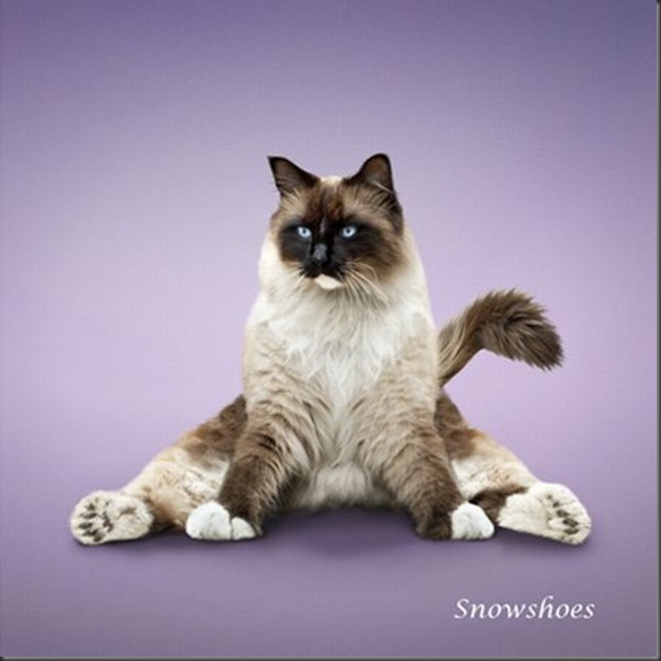 A yoga dos gatos (12)
