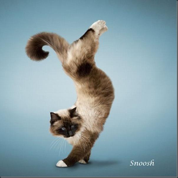 A yoga dos gatos (10)