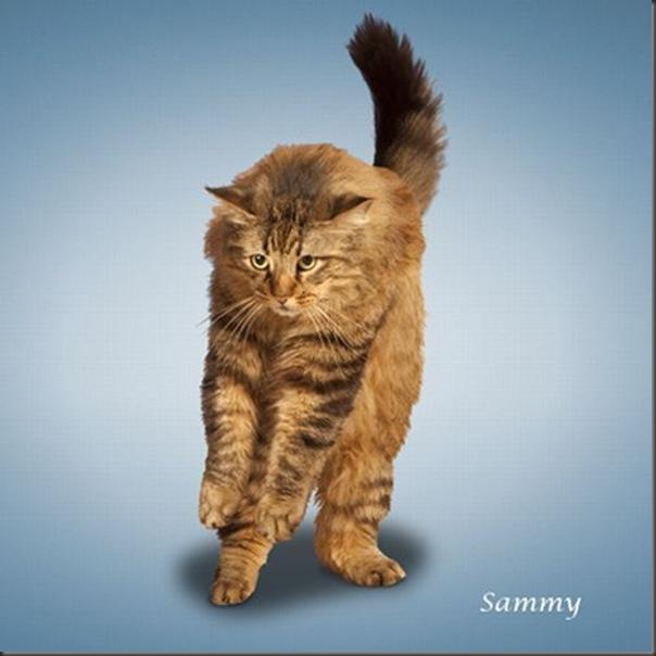A yoga dos gatos (9)