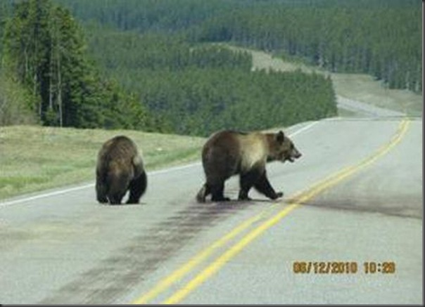 Jantar romantico entre ursos (13)