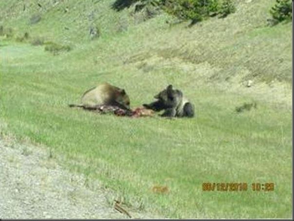 Jantar romantico entre ursos (17)