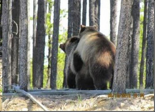 Jantar romantico entre ursos (33)