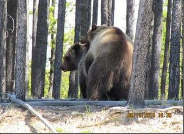 Jantar romantico entre ursos (35)