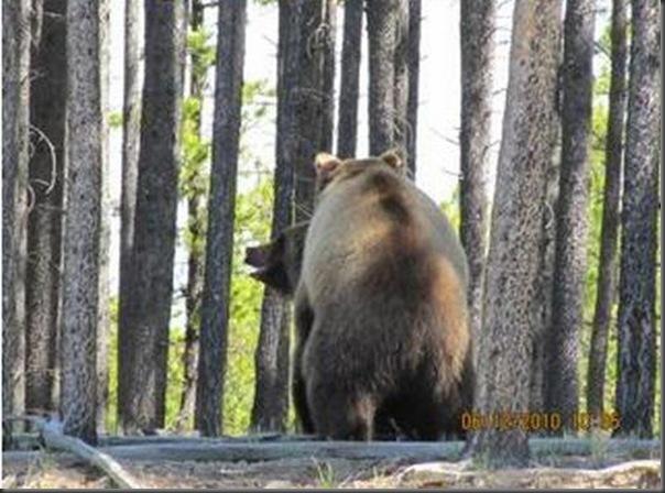Jantar romantico entre ursos (36)