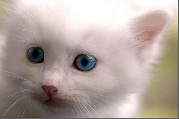 Um gatinho que parece um brinquedo (5)
