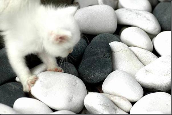 Um gatinho que parece um brinquedo (4)