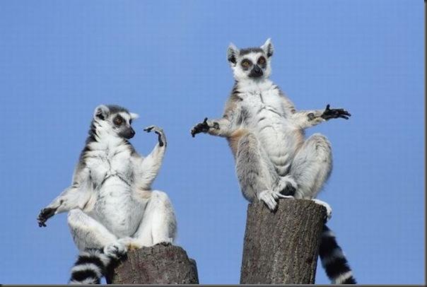 Lemures Zens