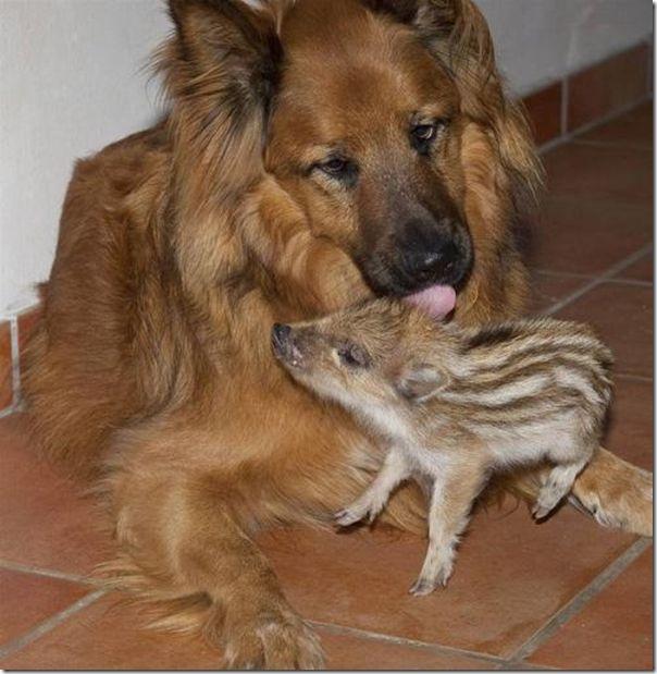 Animais adotados (5)