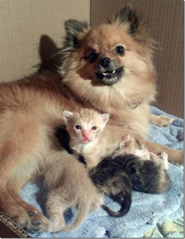 animal_adoptions_09