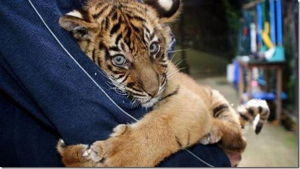 Eu quero um abraço