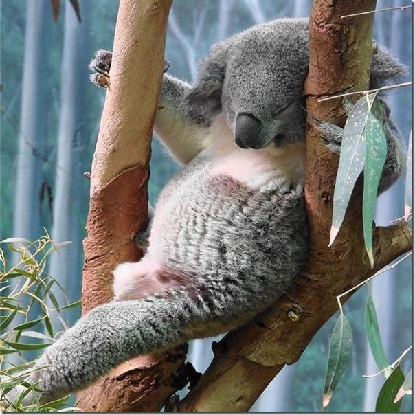 Animais fofos dormindo (20)