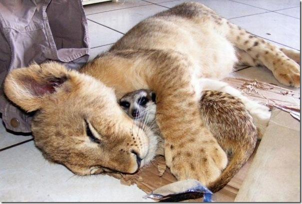 Animais fofos dormindo (19)