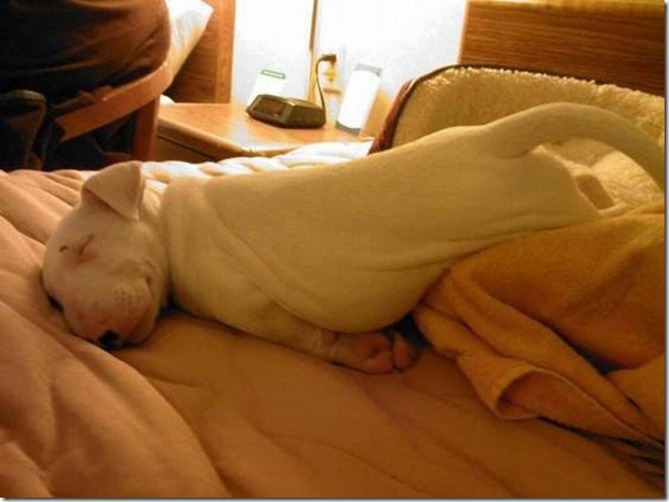 Animais fofos dormindo (12)