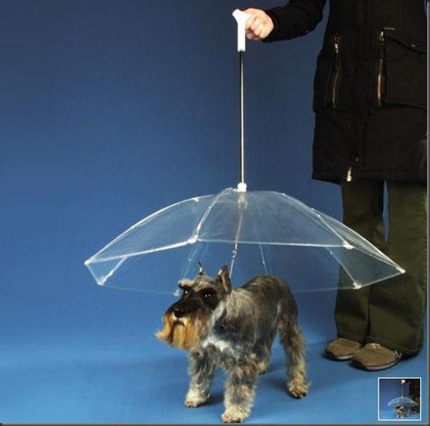 Guarda chuva pra cachorro