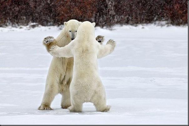 Vamos dançar tango querida
