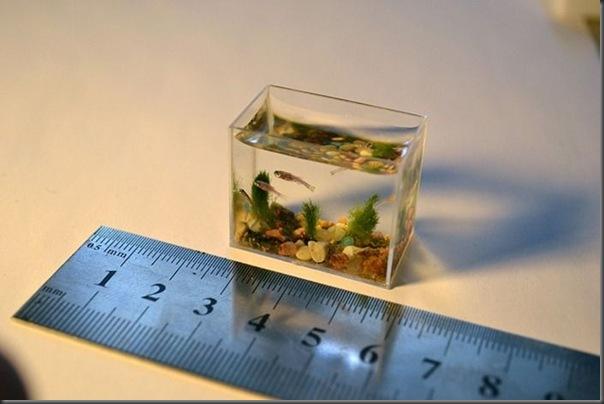 O menor aquário do mundo (2)