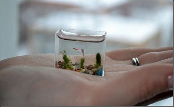 O menor aquário do mundo (3)