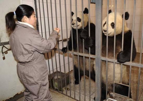 Freedom to Pandas!