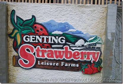 Strawberry- Leisure Farm