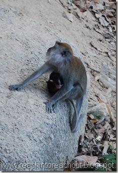 Babymky +Monkey