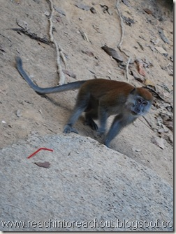 Monkey :D