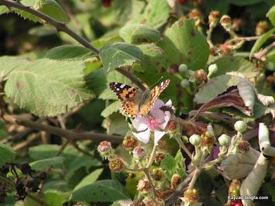 پروانه در سفر شمال