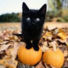 How To Hold A Samhain Rite To Honor Animals Cover