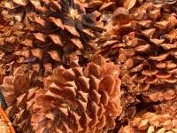 Winter Solstice Potpourri Cover