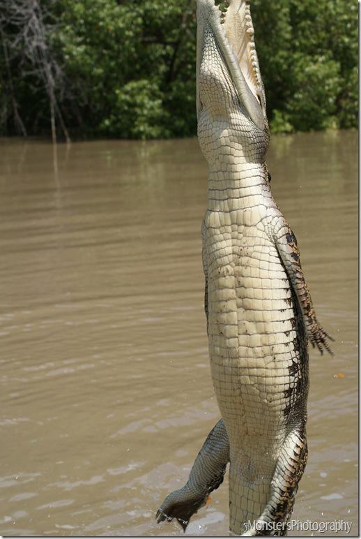 crocs56