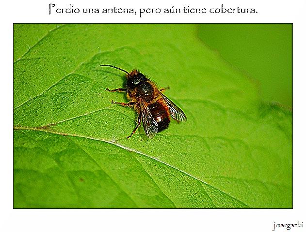 perdio_una_antena