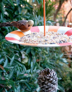 birdiesnackshack2