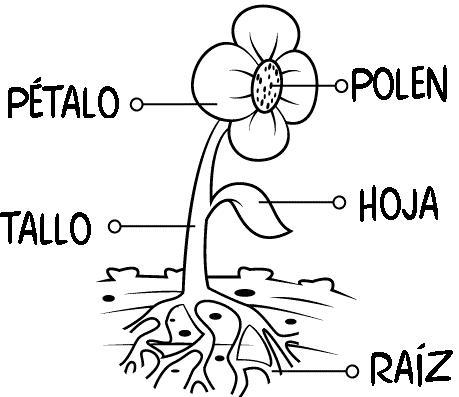 Partes de la flor para niños de preescolar - Imagui