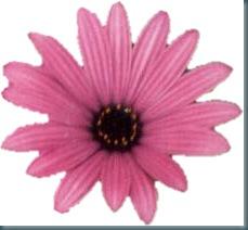 gt pink flower