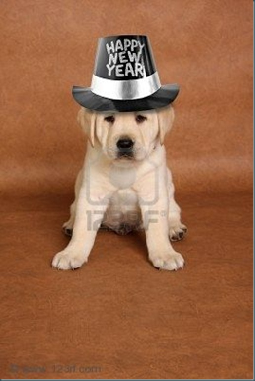 8289854-happy-new-s-year-puppy-with-a-funny-expression