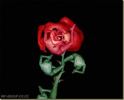 flores humanas 2