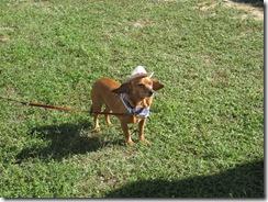 cowboywiener