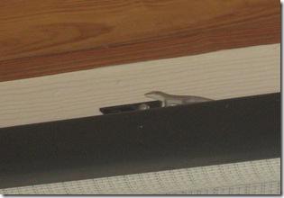 insurance gecko