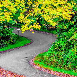 by Jennifer Martin - Landscapes Travel ( fall, color, colorful, nature )