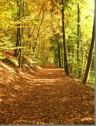 2008-10-18 Autumn Dog Walk 036